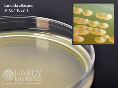 Malt Extract Agar, deep fill, 15x100mm plate, order by the package of 10
